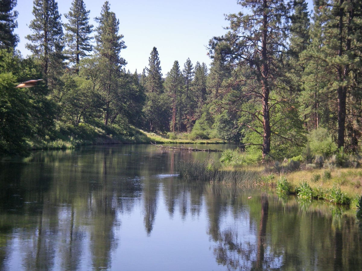 Fall river and hat creek california trout inc for Hat creek fishing