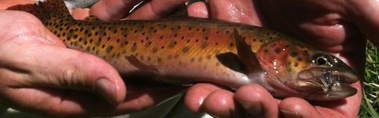 Slinkard Creek Lahontan