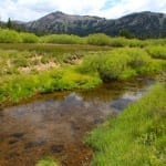 Kirkwood Meadow 2