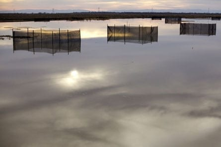 Central Valley Fish and Floodplains