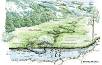 Mountain-Meadows-Graphic_healthy_12.18