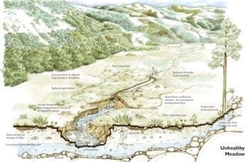 Mountain-Meadows-Graphic_unhealthy_12.18