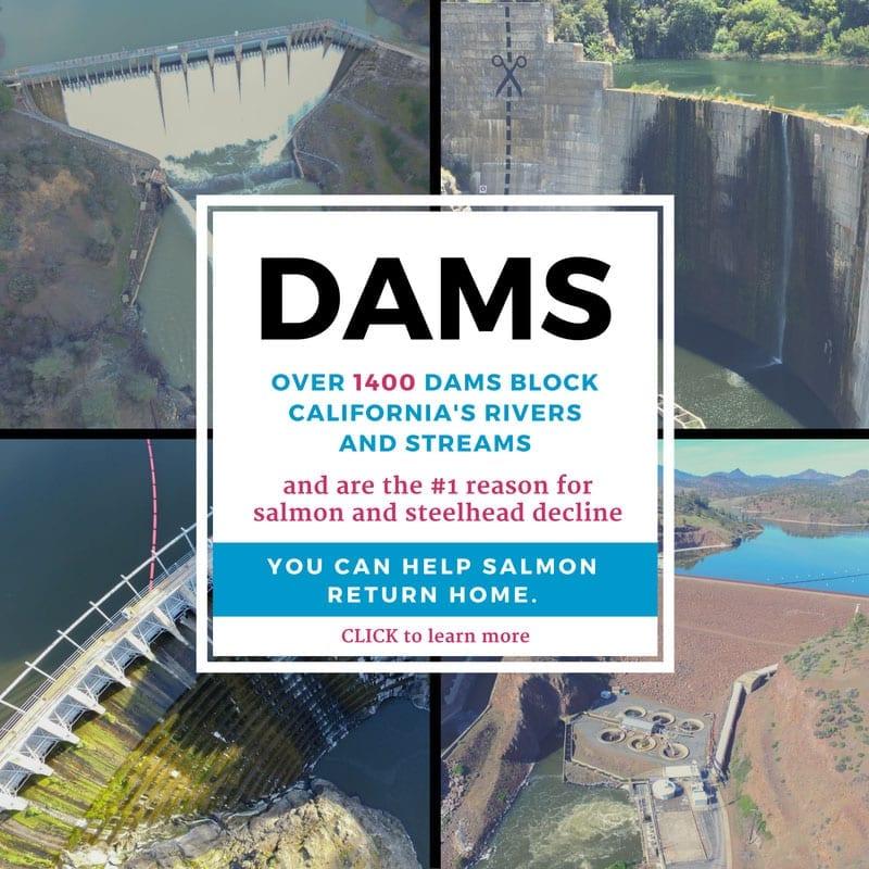 dams-pop-up