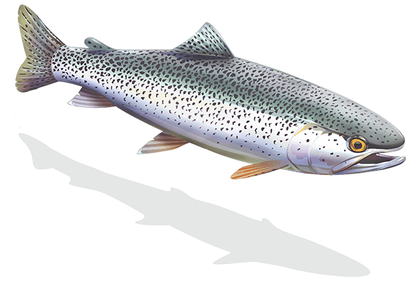 Hat creek fishing report 2018