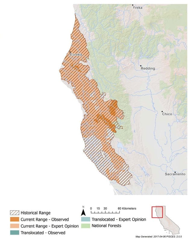 California Coast Chinook Salmon   California Trout, Inc