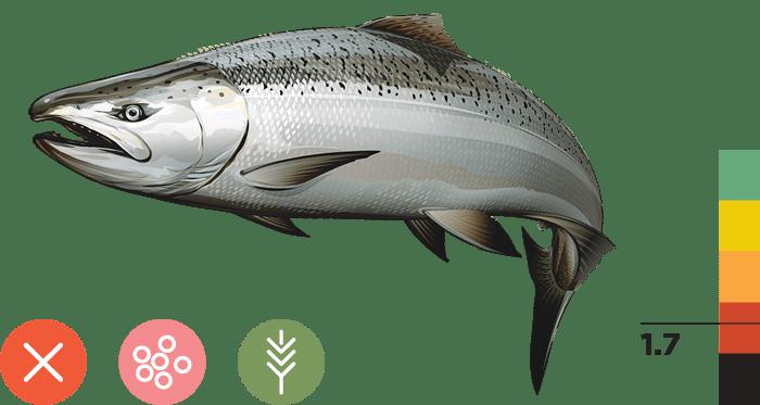Spring-run Chinook Salmon